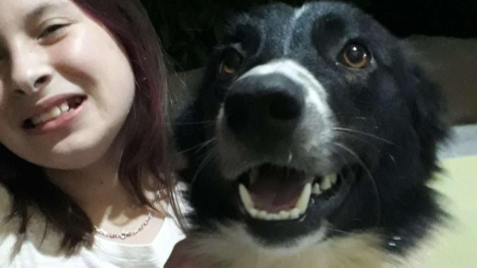 Lassye, a teregető kutya