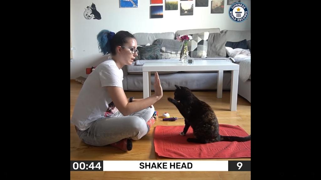 26 trükköt tud ez a cica 1 perc alatt, Guinness-rekorder lett – videó!