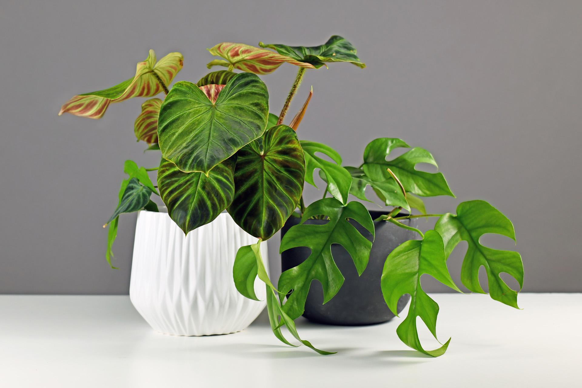 Milyen szobanövények lesznek menők?