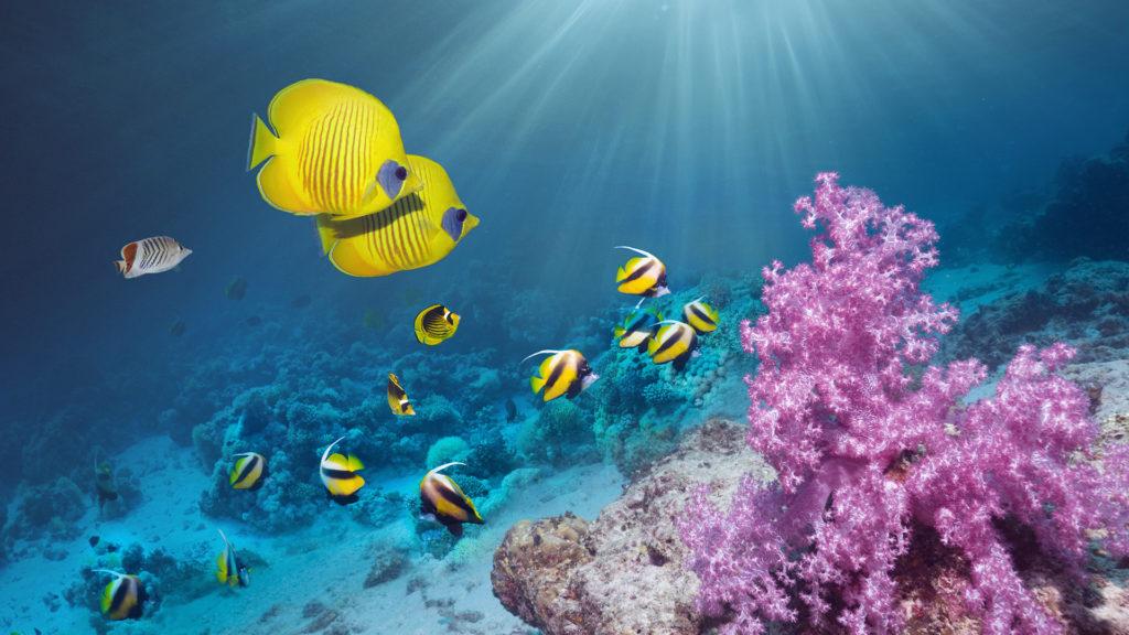3D-nyomtatott korallzátonyokkal kísérleteznek