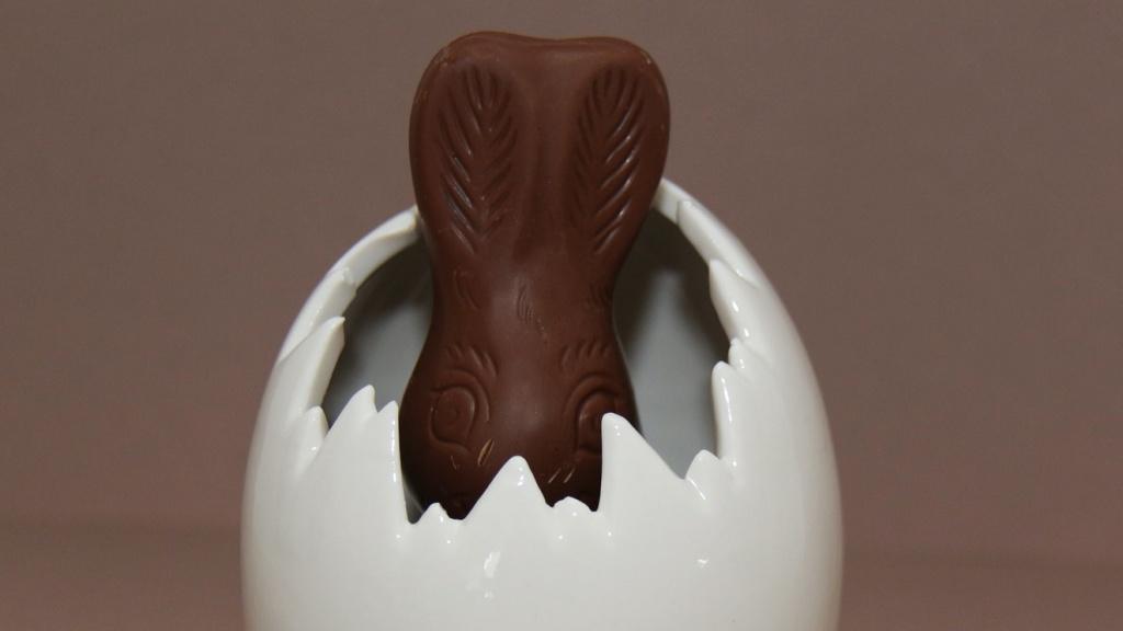 Csokinyúl