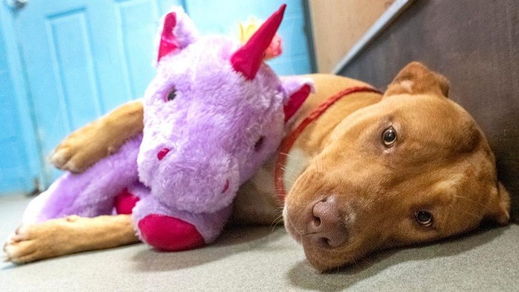 Lila plüssunikornist próbált többször is ellopni egy áruházból a cuki kóbor kutya