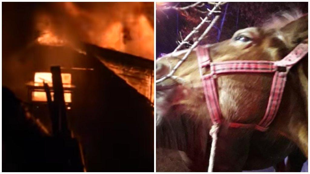 Égő istállóból mentette ki a lovakat