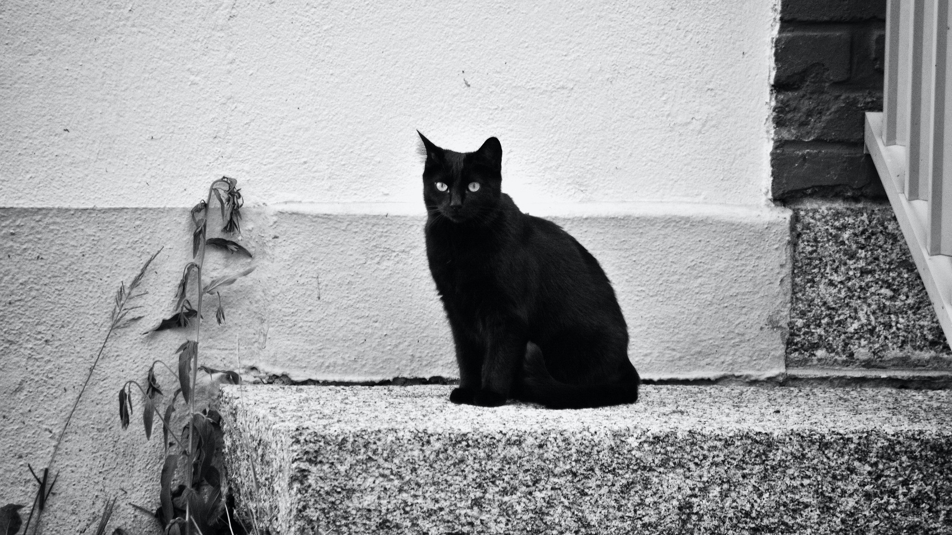 Fekete macska a ház előtt