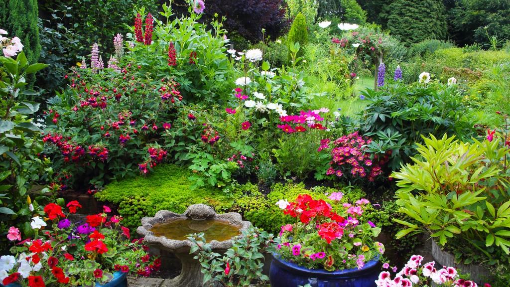 Igénytelen kerti növények, virágok