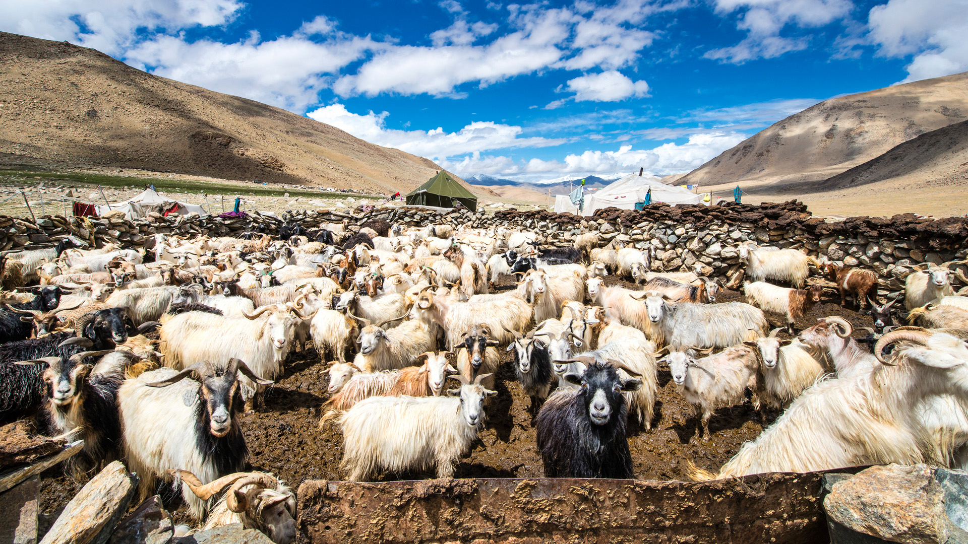 Changtang: A világ tetején