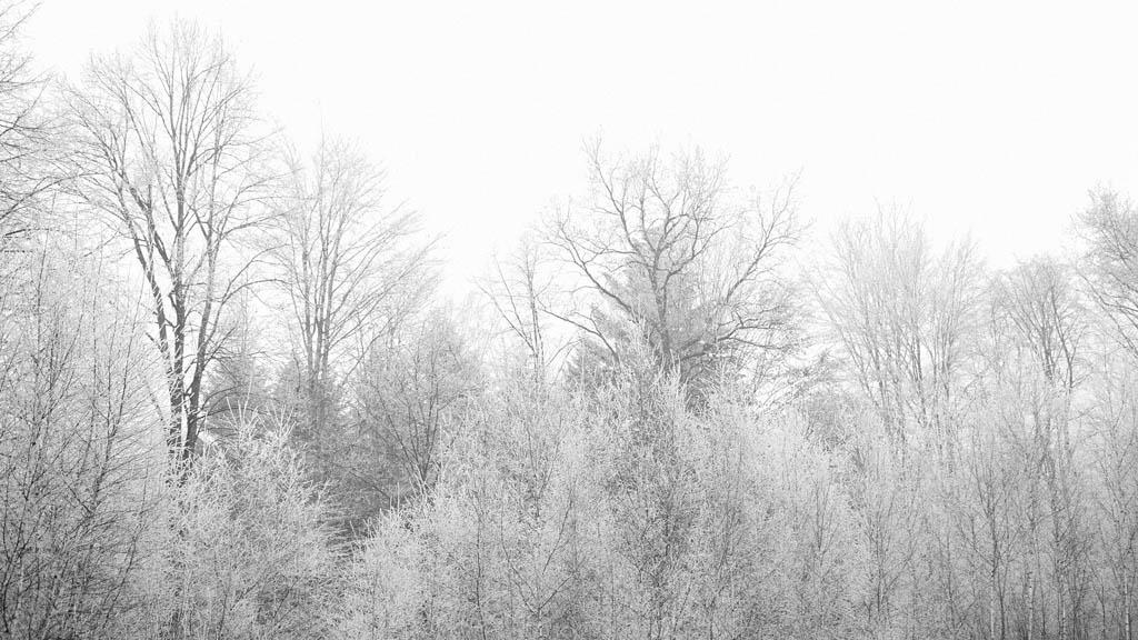 havas, kopár fák
