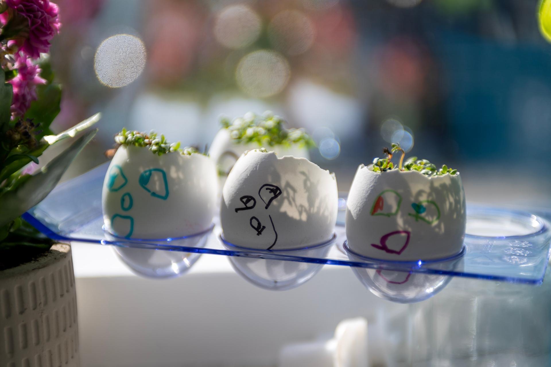 Ültess növényeket tojáshéjba