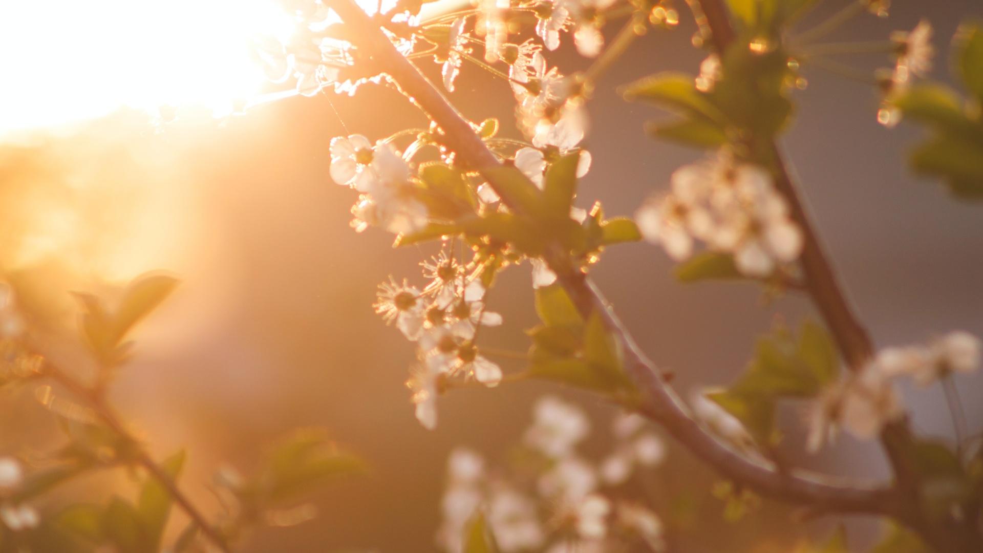 Tavaszi napsütés