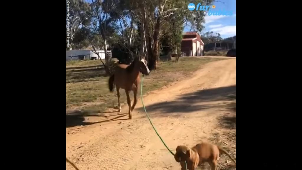 Lovat sétáltat a kutya