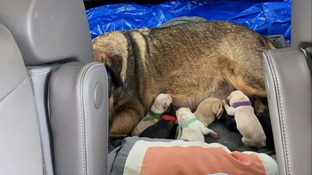 12 óráig szült egy autóban a kutya