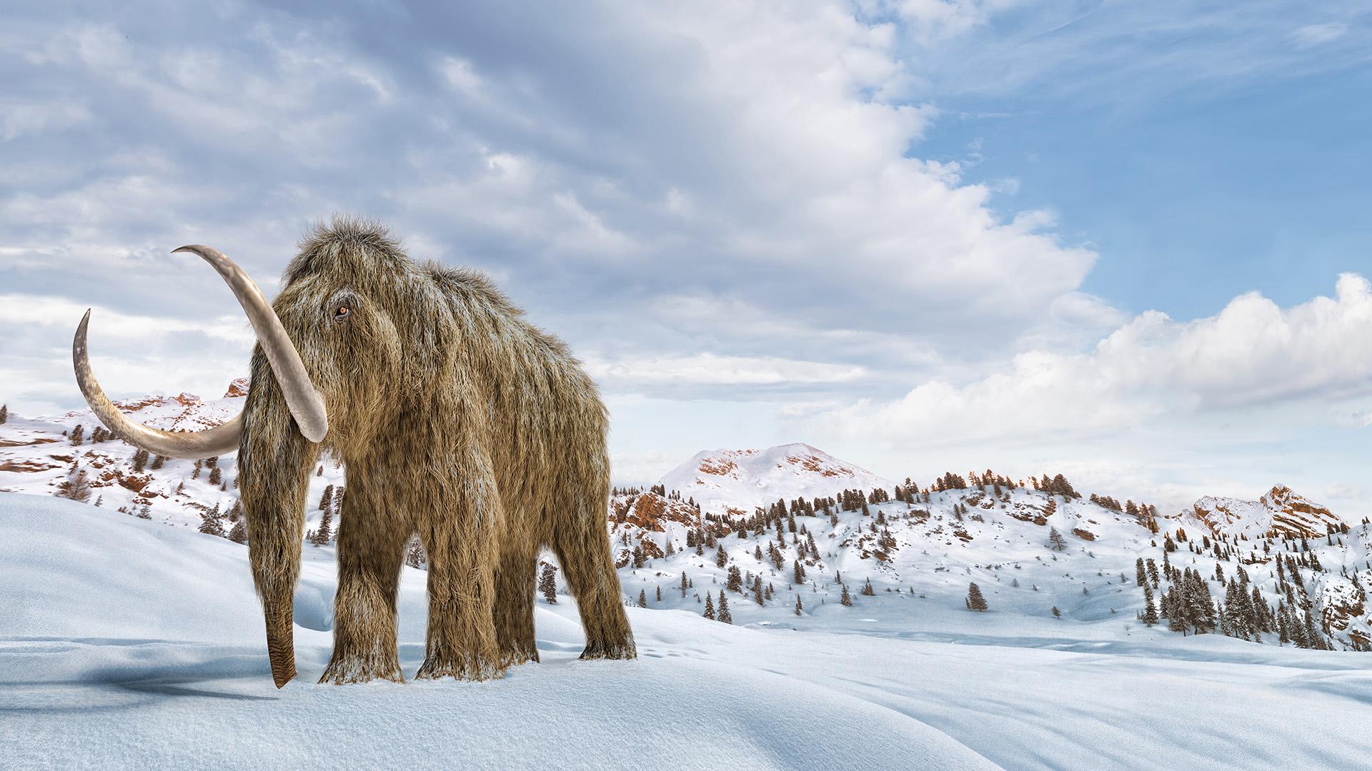 Egy mamut maradványait találták meg magyar régészek Ausztriában