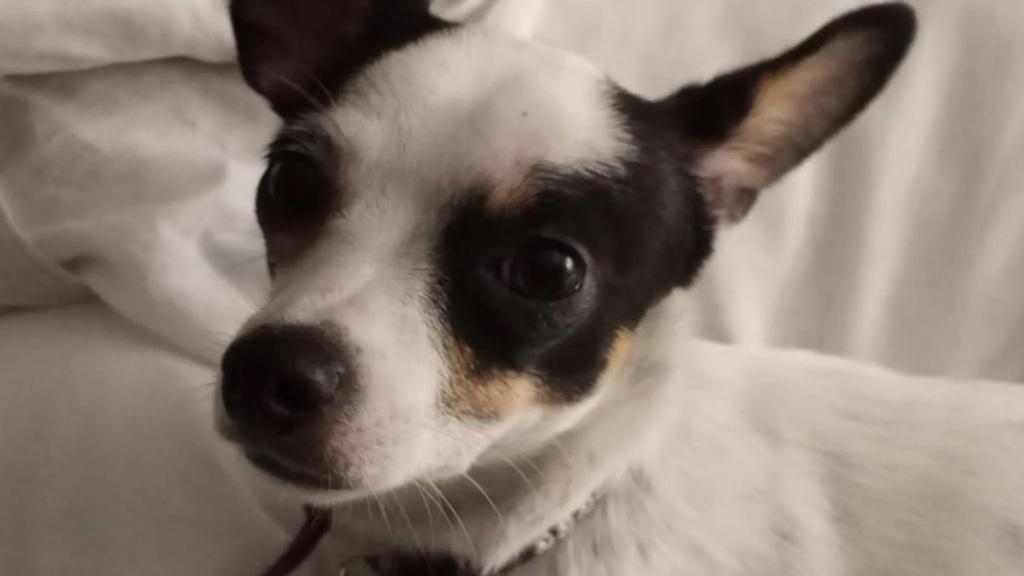 Túlélte a lakástüzet a kutyus, két hetet várt a gazdijára