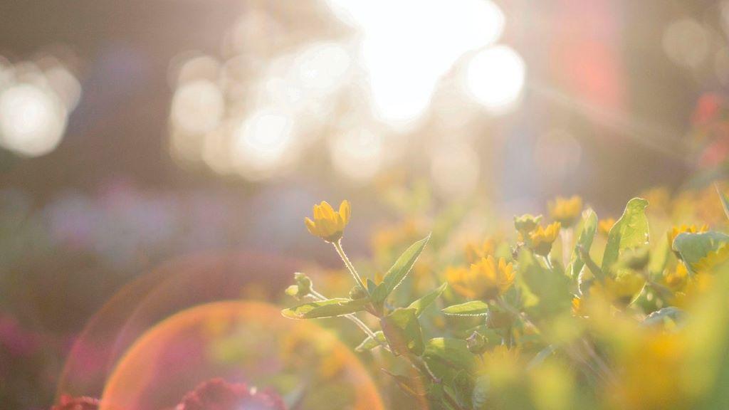 napsütés, tavasz