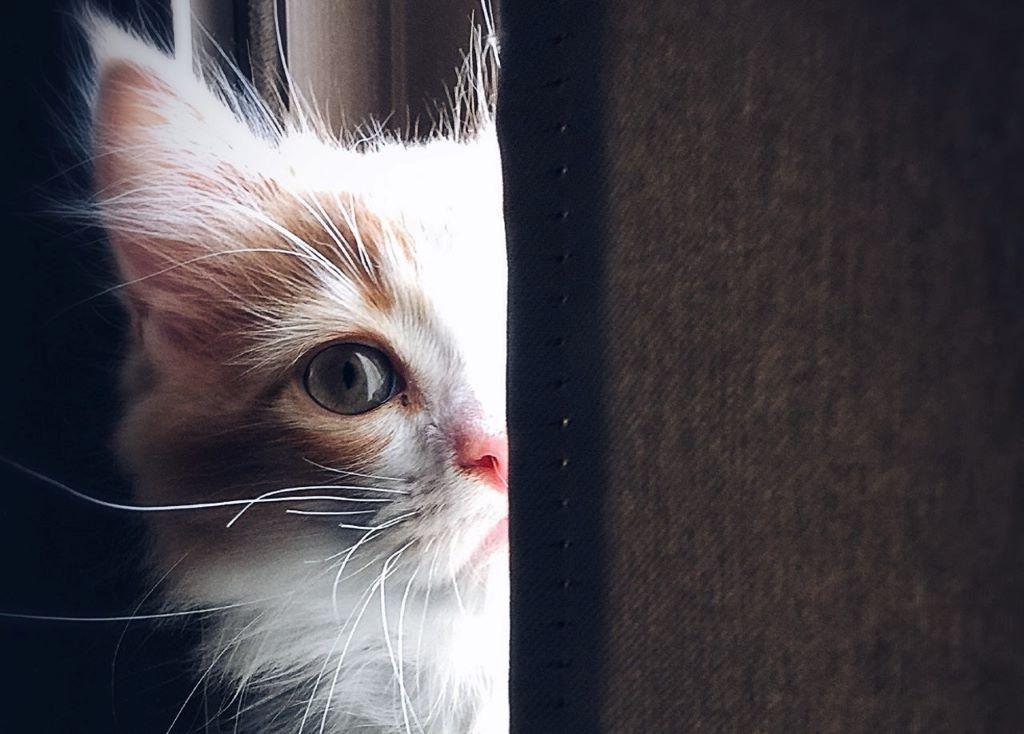kölyök cica, macska