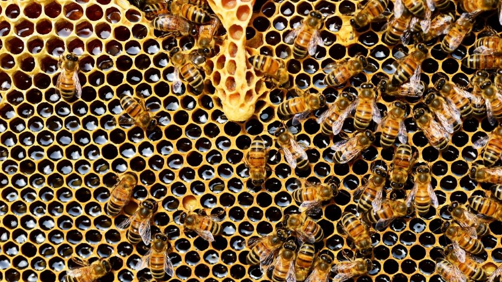 méz, méhek