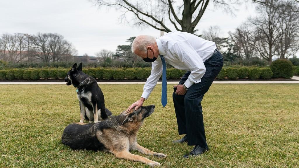 Joe Biden épp Majorrel és Champpel játszik (fotó: Profimédia)