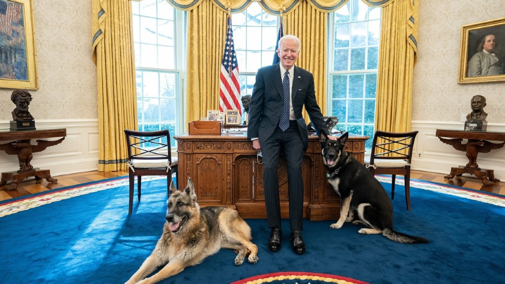 Joe Biden a kutyáival pózol (fotó: Profimédia)