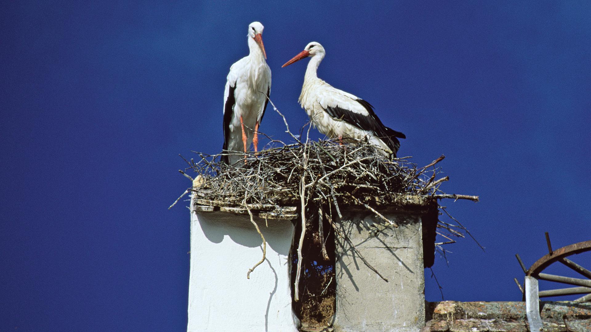 Ismét hazatért az ország leghűségesebb gólyája