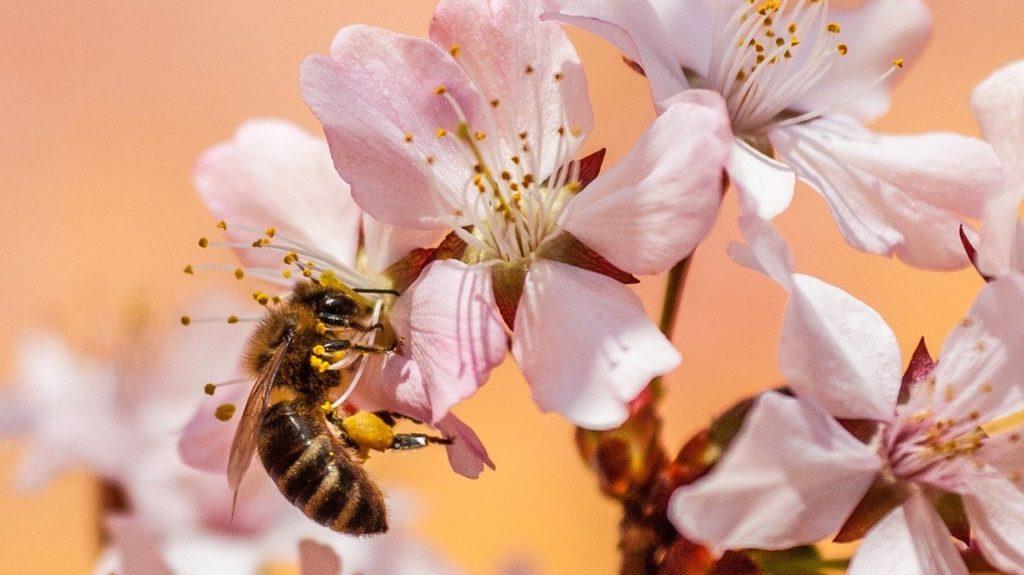 Méh virágon