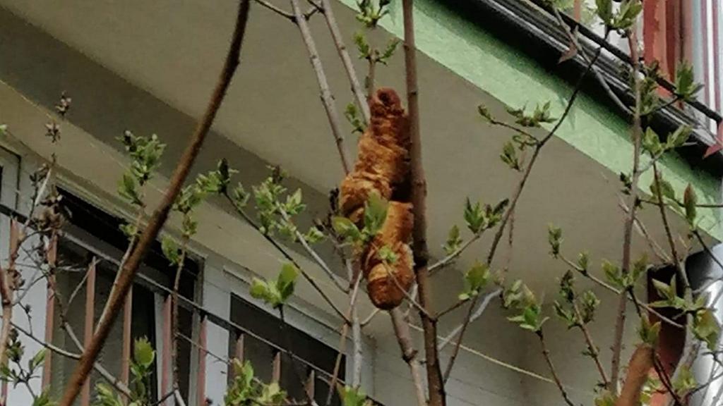 Hüllőnek nézte a fára akadt péksüteményt, még az állatmentőket is kihívta
