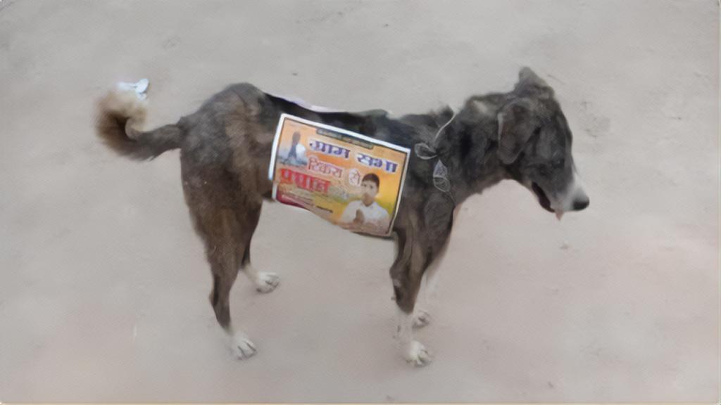 Kóbor kutyák Indiában