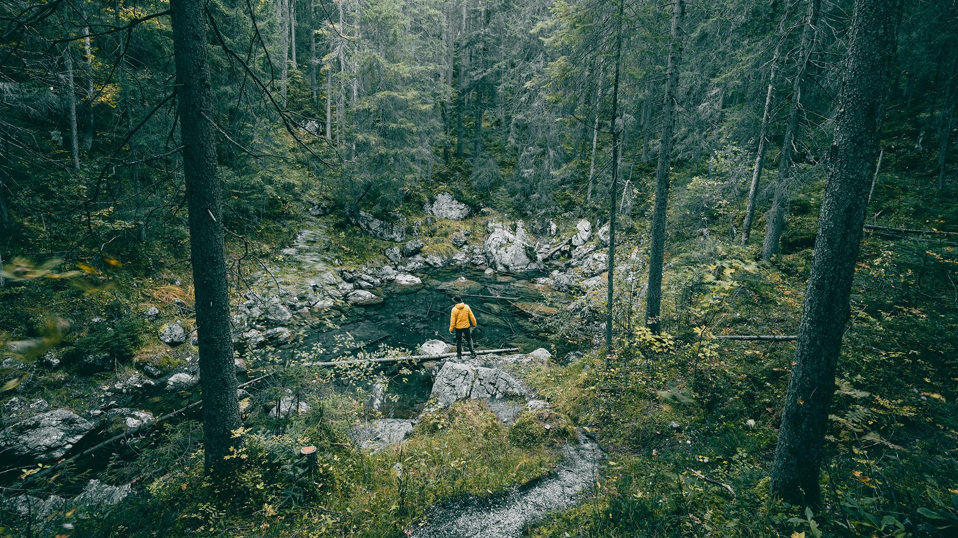 Bajor erdő
