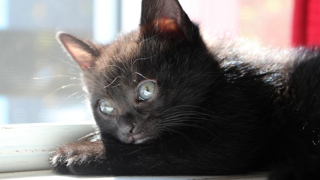 Egy pláza üres üzletében találtak rá egy cicára - Vajon hogy kerülhetett oda?