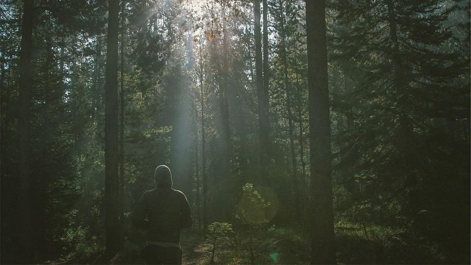 Futás erdőben