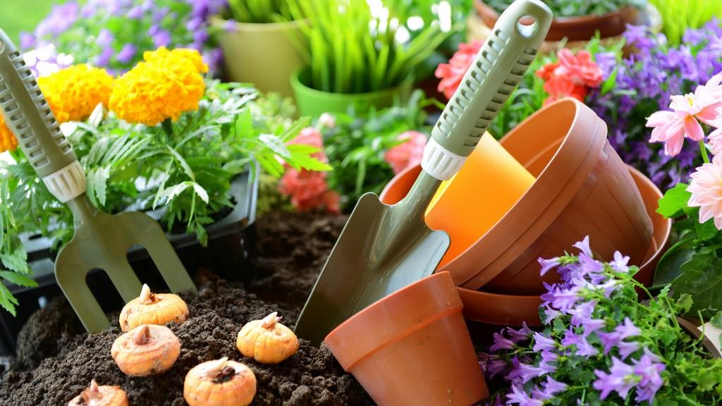 Virág ültetés hagymáról