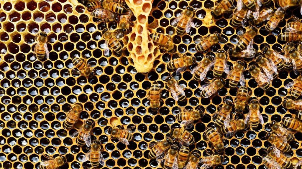 Készül a méz