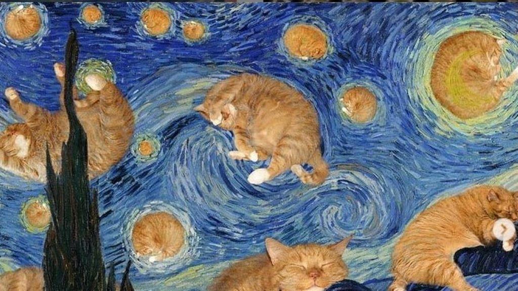 kövér, macska, képek