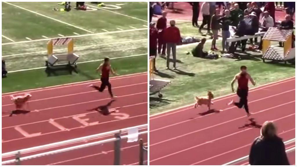 Kutya szaladt be a futóversenyre, és győzött