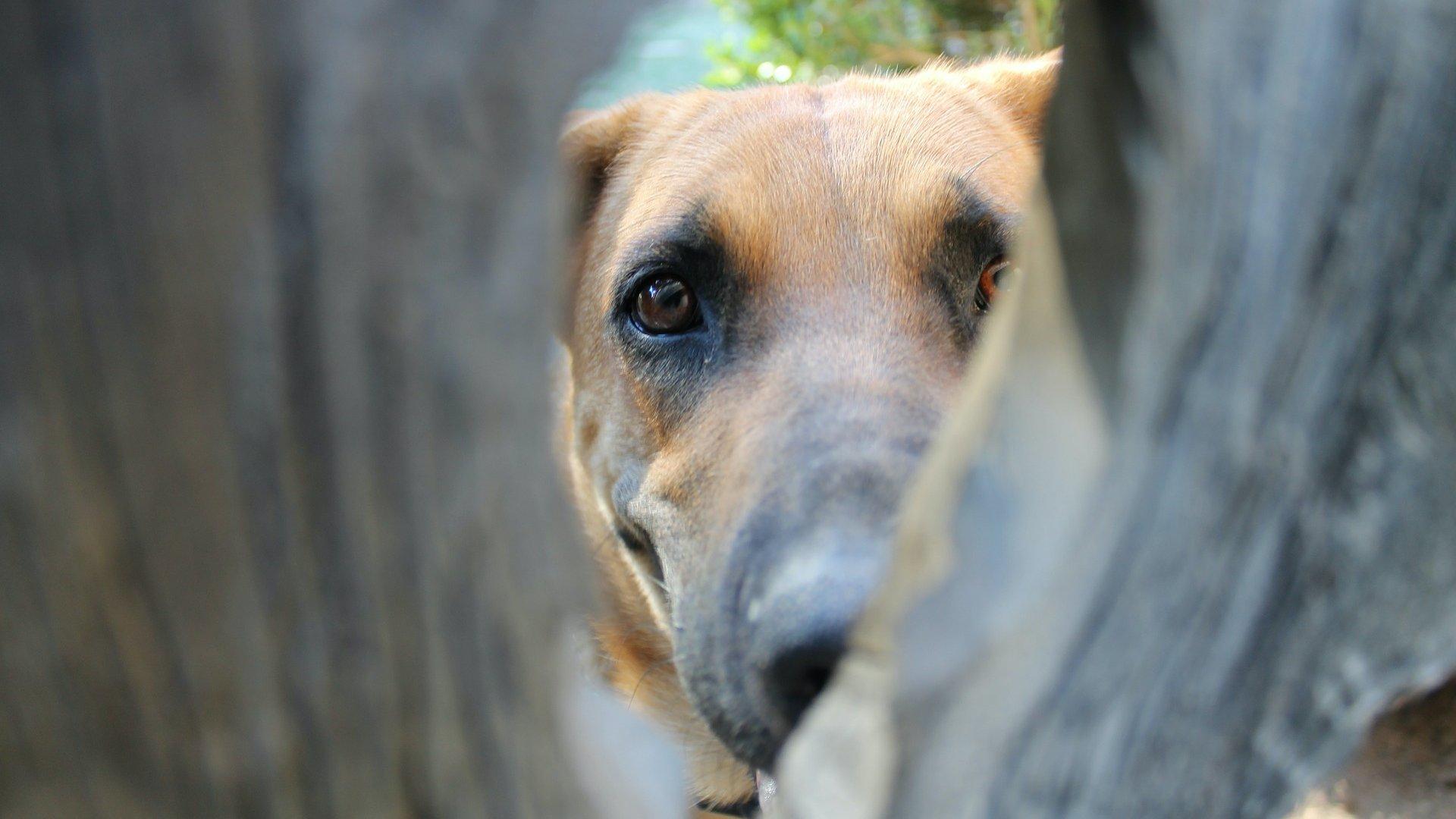 Kutya a kerítés túloldalán