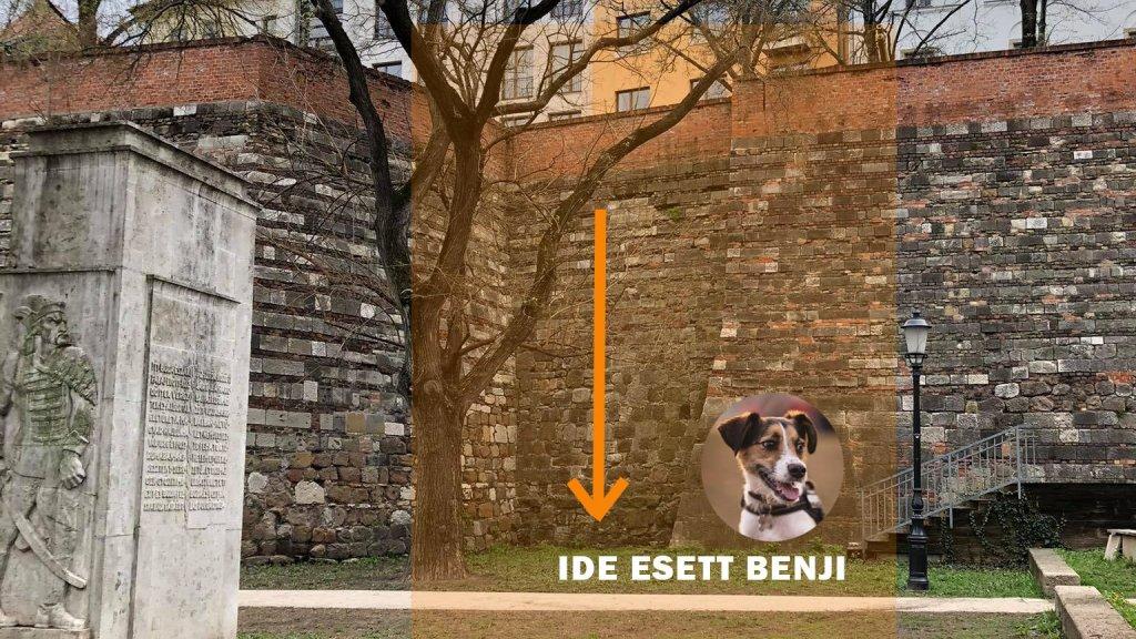 Lezuhant kutya a budai várban