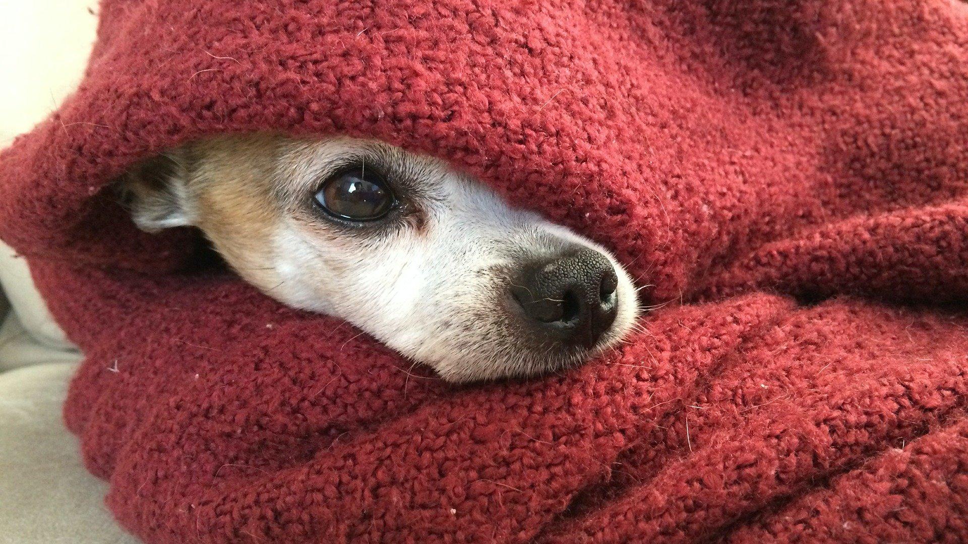 Kutya takaróban