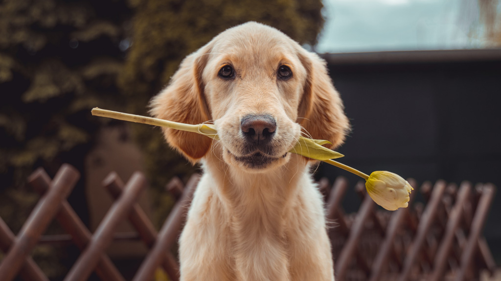 kutya virággal a szájában