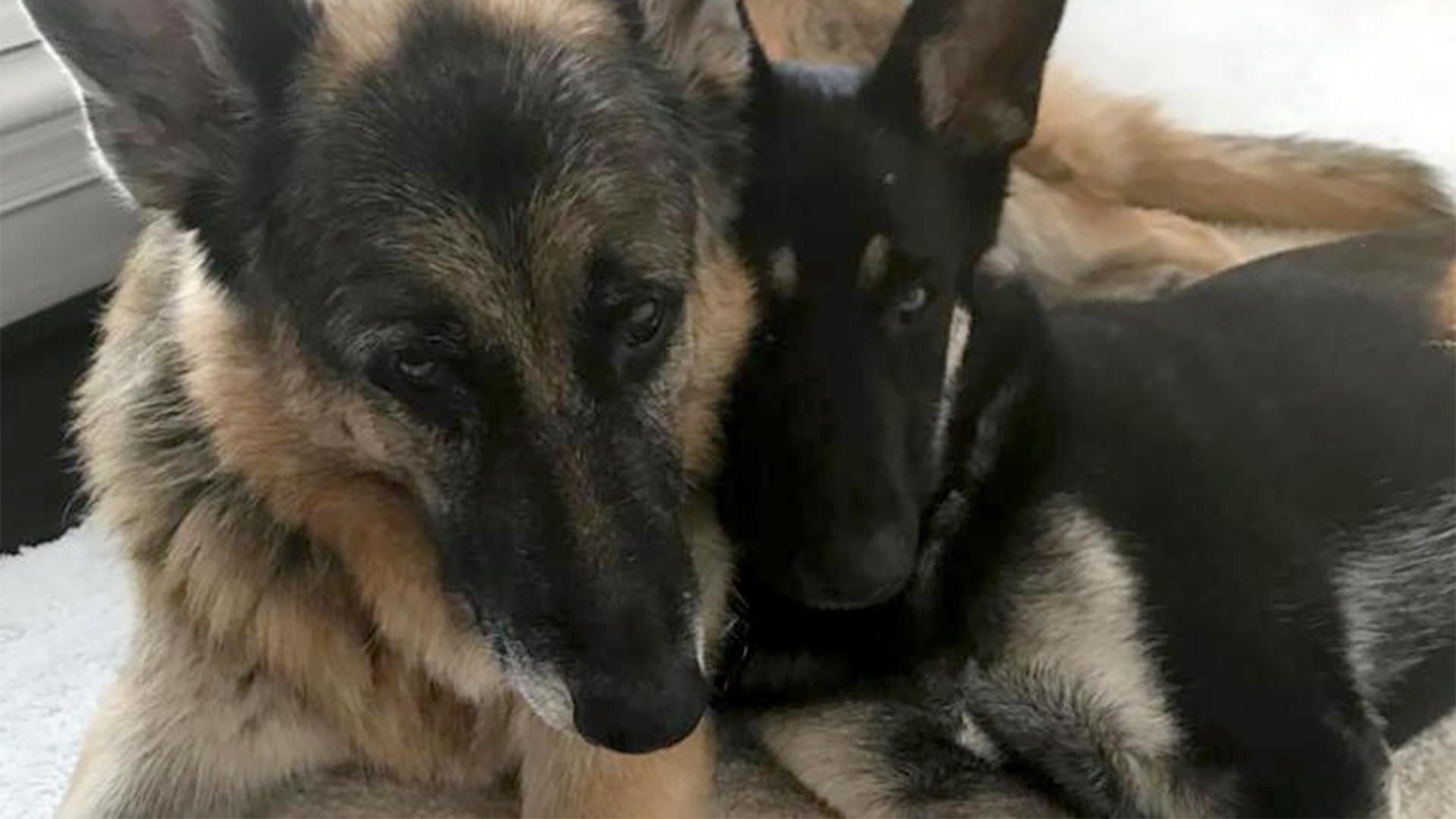 Ismert kutyatrénerek mondtak véleményt Joe Biden harapós kutyájáról