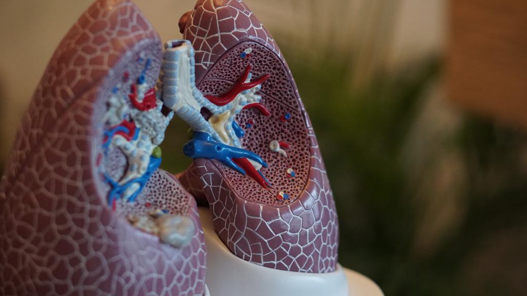 műanyag tüdő biológia órán