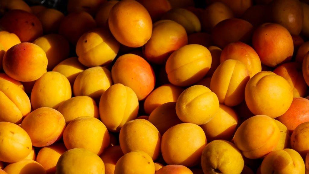 barack, gyümölcs, hazai termék