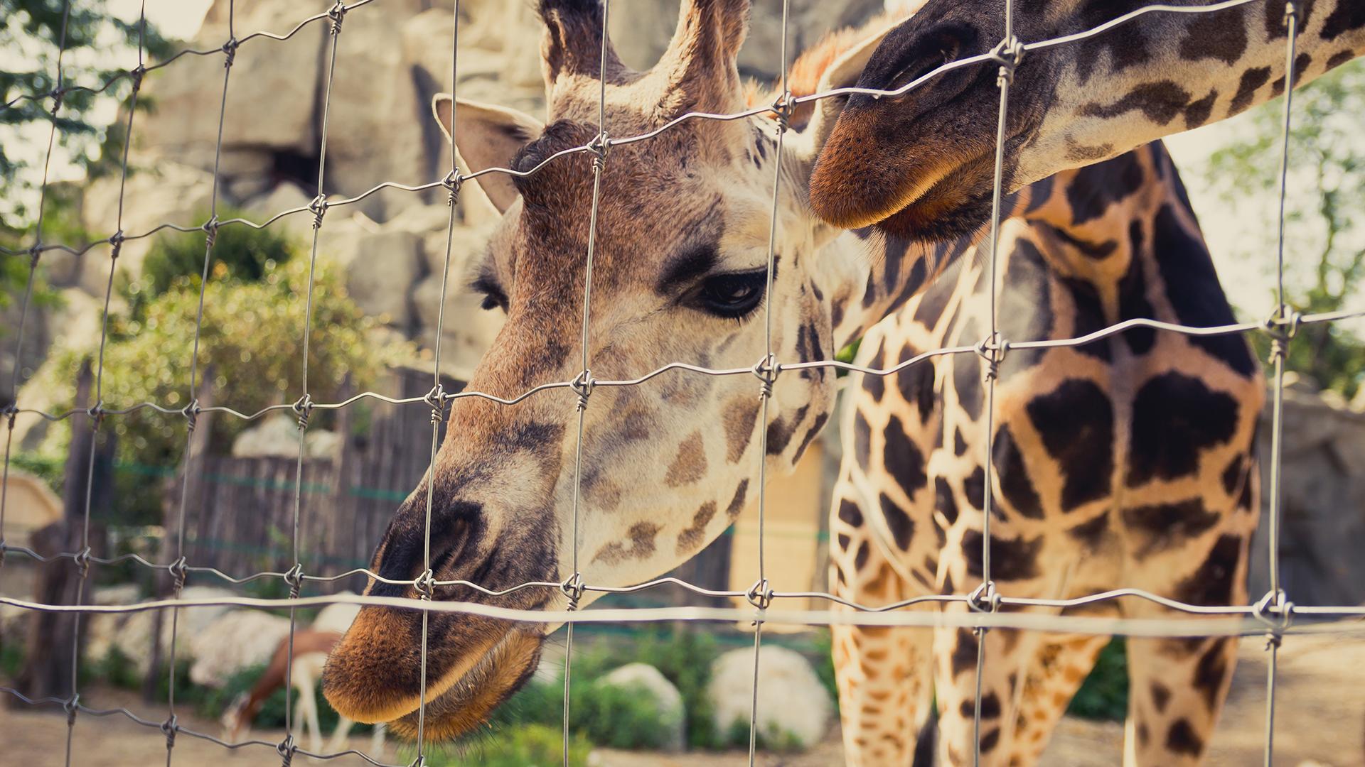 Petícióban kérik az állatkertek, vadasparkok nyitását