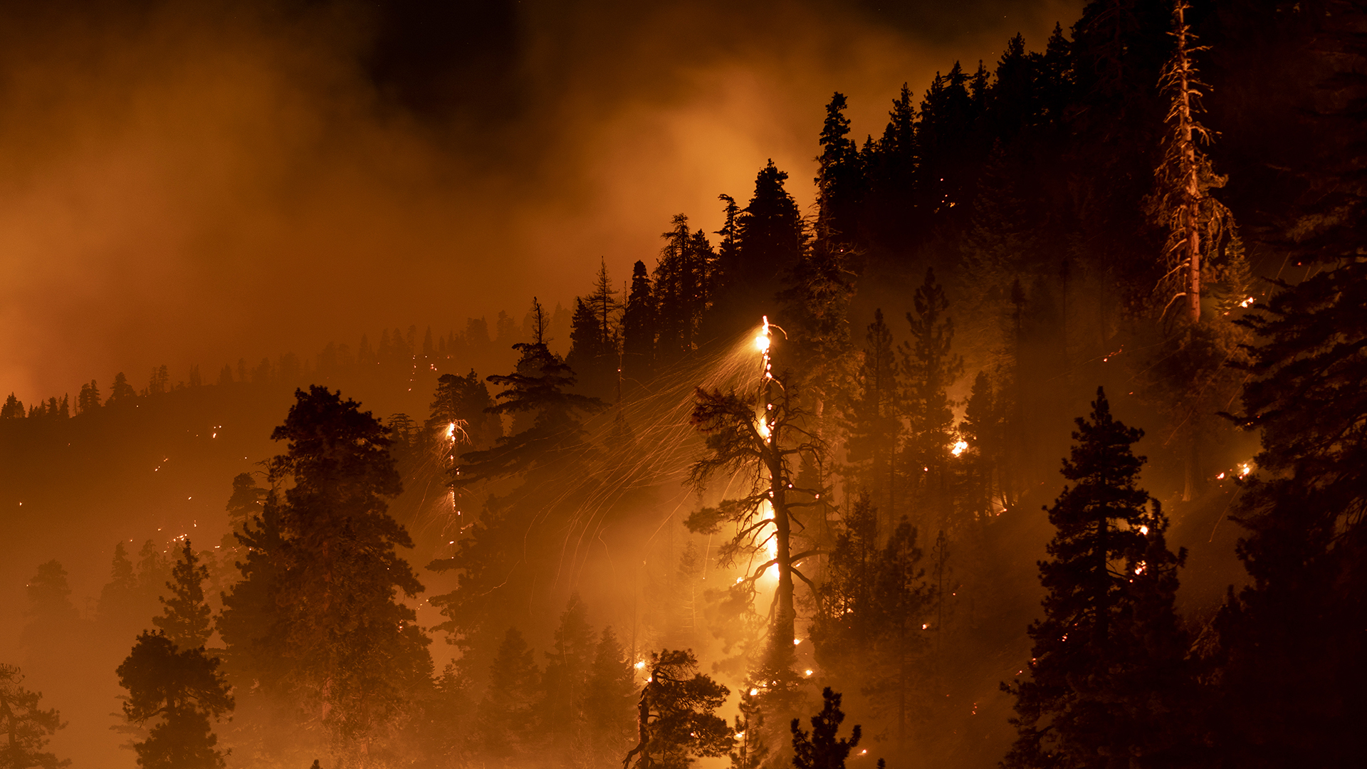 A tavalyi erdőtűz óta parázslik egy mamutfenyő Kaliforniában