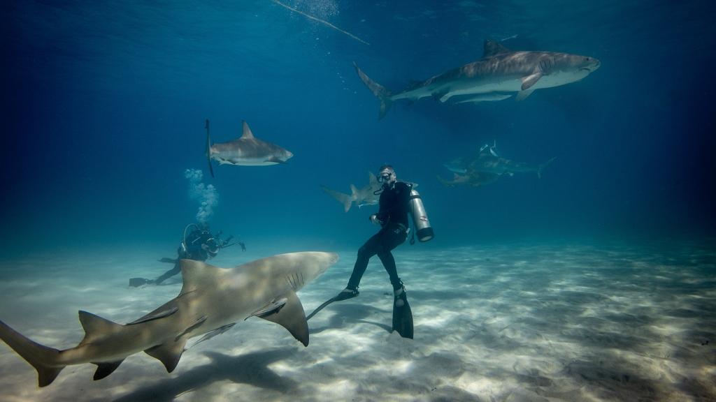 """Igazi szeretetet kap a cápáktól Károly, a """"cápasuttogó"""""""