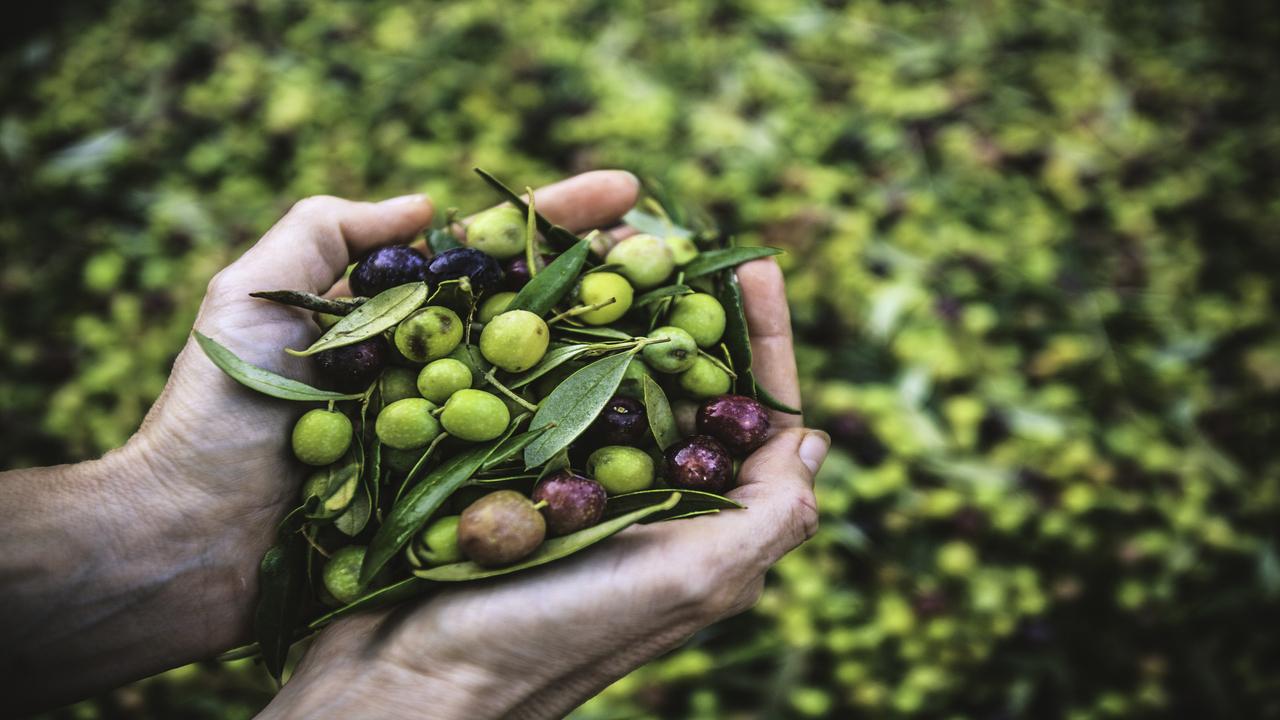 Drágul az olívaolaj