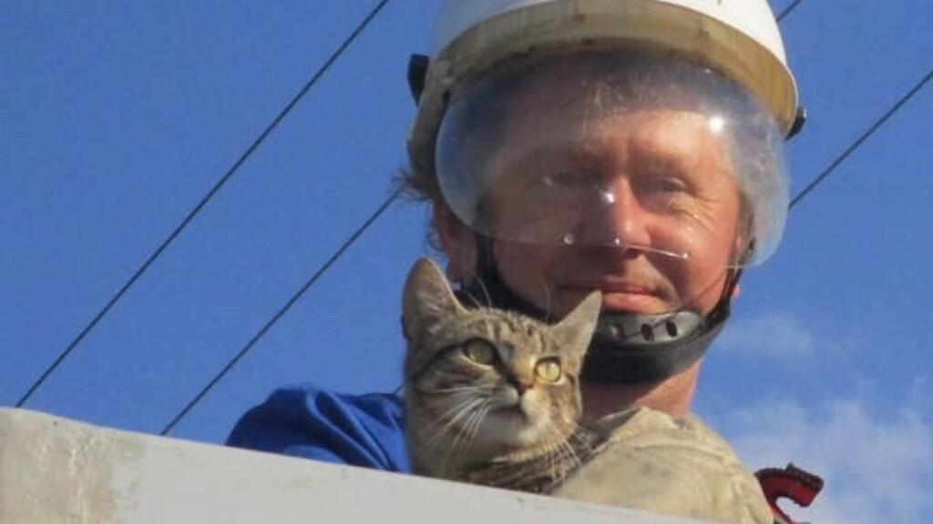 Hétméteres villanyoszlopon rekedt cicát mentettek meg az állatbarát villanyszerelők