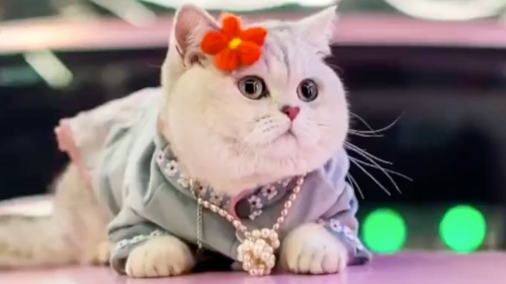 Mao Mao, az autós macskamodell