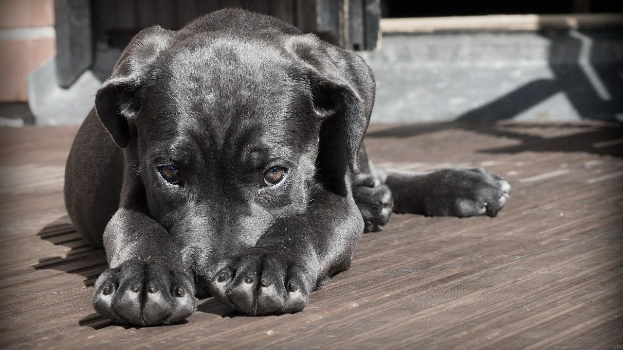 Vizsgálják a kutyák rejtélyes bénulását (fotó: Pixabay)