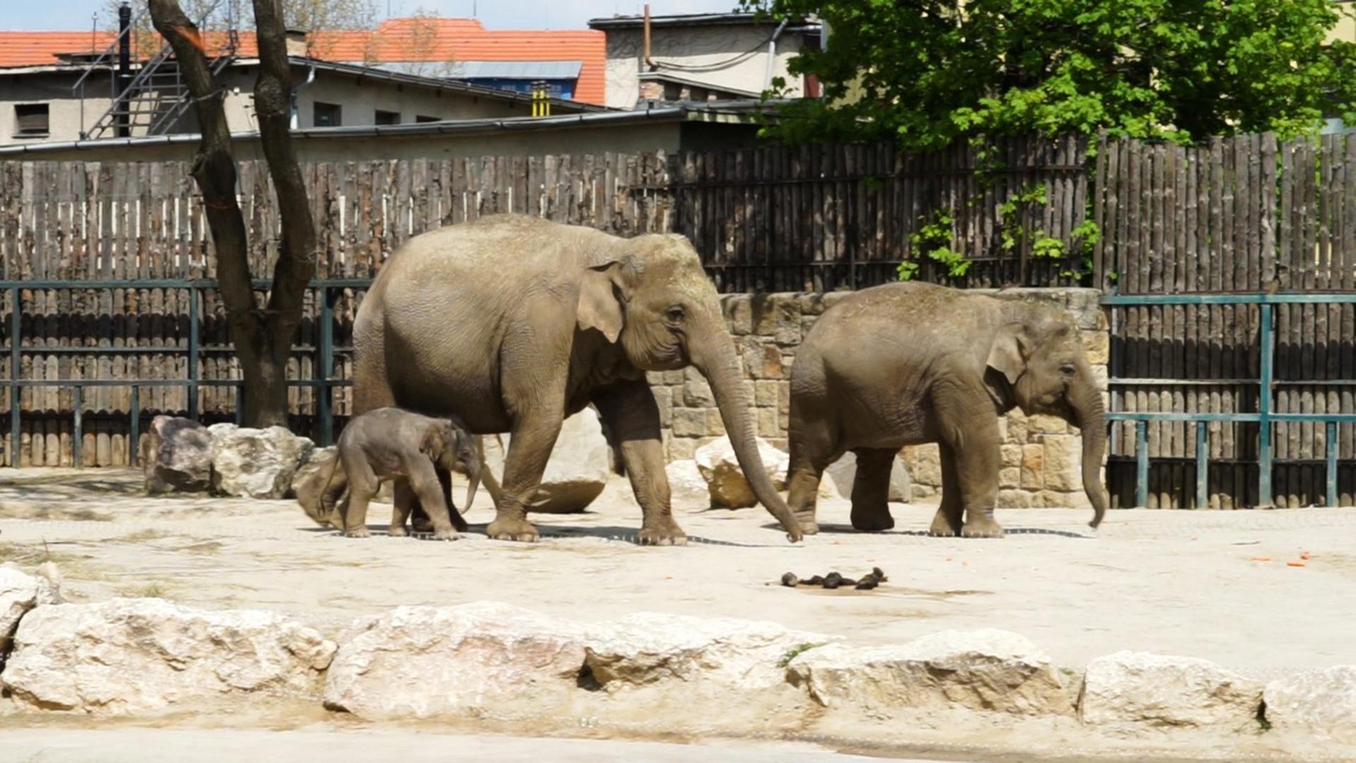Te is szavazhatsz az állatkerti kiselefánt nevére