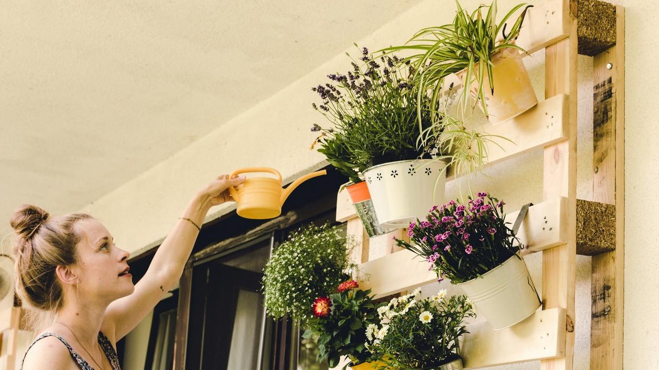 Tápoldat növényeknek, virágoknak