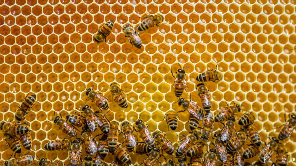 Recept a méhekkel a prosztatitisből